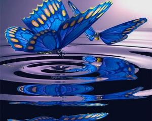 butterfly-pool