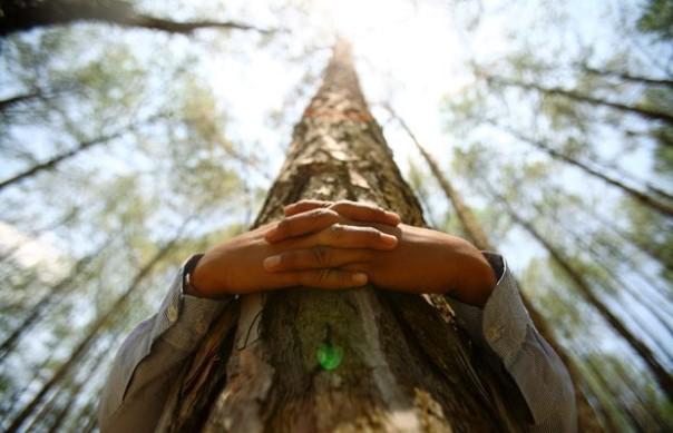 tree-hugging1-620x400