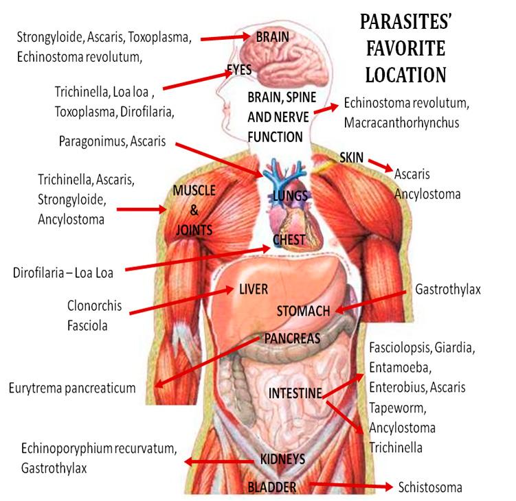 parasites-locations
